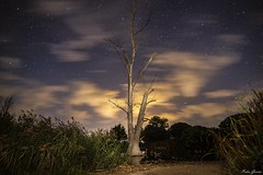 Magic Tree (Peideluo) Tags: night nightscape landscape tree longexposure clouds cloudscape árbol elitegalleryaoi bestcapturesaoi