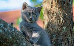 Kika (07) (Vlado Ferenčić) Tags: kitty kittens kittysuperstar catsdogs vladoferencic cats pets dof vladimirferencic animals animalplanet zagorje hrvatska croatia nikond600 tamron9028 closeup