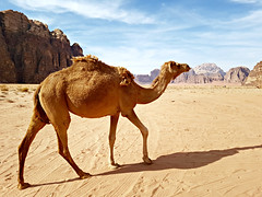 20181007_151956 (72grande) Tags: jordan wadirum arabiannights camp