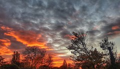 A stunning sunrise!😀 (LeanneHall3 :-)) Tags: groupenuagesetciel red orange grey white blue sky skyscape sunrise trees branches rooftop eastpark hull kingstonuponhull landscape samsung