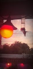 A Dramatic Drink 🍹 (Chic Bee) Tags: hover hovering inflight tucson arizona usa americansouthwest southwesternusa northamerica november2018 feeder feeding colorful poollight poolside evening dusk goldenhour light