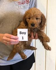 Darby Boy 1 pic 2 12-9