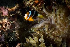 IMG_7136 (Gil Xavier) Tags: underwater scuba philippines canon fantasea g7xmk2 cebu moalbal turtlebay