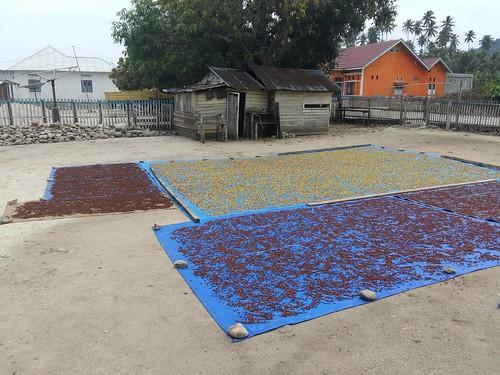 Clove Drying in Santigi