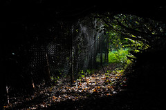 On The Fence (tyrellblack87) Tags: fence nature trees leaves autumn fall colour shadow light contrast glow fujifilm fuji fujix100t forest