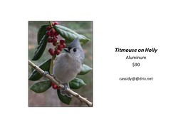 "Titmouse on Holly • <a style=""font-size:0.8em;"" href=""https://www.flickr.com/photos/124378531@N04/30423649757/"" target=""_blank"">View on Flickr</a>"