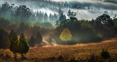 (Feans) Tags: sony a7r a7rii ii fe 24105 g lampai teo galiza galicia autumn fall outono otoño mist fog neboa