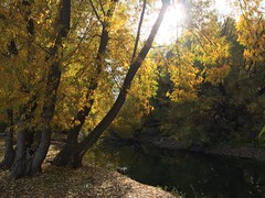 IMG_2761 (August Benjamin) Tags: provorivertrail provocanyonpkwy provoriver provocanyon provo orem utah mountains fall fallcolors trees leaves autumn jogging southfork vivianpark