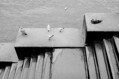 High tide (lorenzoviolone) Tags: finepix fujixt20 fujifilm fujifilmxt20 xt20 mirrorless fav10