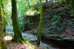 Den of Ayleth (nz_willowherb) Tags: scotland angus ayleth denofayleth woods trees forest river den