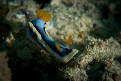 IMG_6925 (Gil Xavier) Tags: underwater scuba philippines canon fantasea g7xmk2 cebu moalbal turtlebay