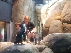 2018-09-30 10.50.07 (littlereview) Tags: carolinas littlereview 2018 travel museum animal penguin aquarium blog