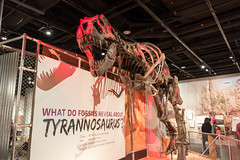 180324 Washington-15.jpg (Bruce Batten) Tags: animals businessresearchtrips dinosaurs locations museums occasions people reptiles shadows subjects trips usa vertebrates washingtondc