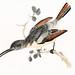 Hummingbird by Johan Teyler (1648-1709)  Original from the Rijks Museum  Digitally
