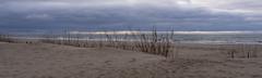 View on Baltic Sea at Yantarny (hermannmaurer) Tags: balticsea baltischesee beach strand sand schilf wolken sky himmel clouds