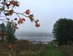 autum ....(170924) (Marie S...) Tags: autumn mist red lake