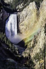 Lower Falls (arcadia1969) Tags: yellowstone nationalpark wyoming grandcanyonoftheyellowstone lowerfalls yellowstoneriver