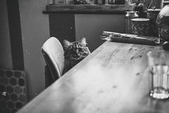 when's dinner? (_elusive_mind_) Tags: katze katzen cat cats wannabeacatinthenextlife blackandwhite bw dinnertime
