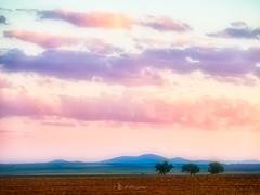 Alternativas (https://www.instagram.com/masjota/) Tags: landscape amazing view tree naturephotography naturewalk naturegram naturelove photooftheday instagood zgz igerszgz zaragoza zgzciudadana igerszaragoza undiaenzaragoza enjoyaragon lifeofspain igersspain igers igersaragon asiesaragon atardecer coucherdesoleil sunset sonnenuntergang 晚霞夕照 夕日 غروب الشمس unlimitedsunset