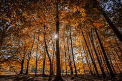Autumn Lights (michel1276) Tags: autumn herbst wald forest tree trees baum bäume sonne sunlight sun batis1828 sonya7iii batis2818