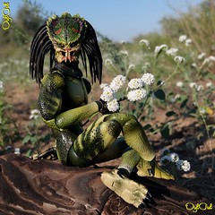 №580. Young Predators on the Ashuluk River Coast (OylOul) Tags: oyloul 2018 q4 oct 16 action figure hottoys predator