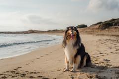 41/52 Leia & sunny mornings (shila009) Tags: leia perro dog roughcollie portrait beach retrato playa cielo sky sand arena mar sea