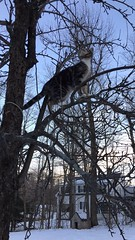 Kitten & Colonial (TangerinesDreamFinds) Tags: dog house colonial cat kitten tabby tiger climbing