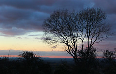 Tree at Nightfall (iwys) Tags: tree nightfall sunset sky red autumn fall halloween devils dyke sussex silhouette clouds dark south downs