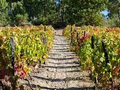 Quinta Da Timpeira (CORMA) Tags: 2015 portugal europe europa portogallo douro vineyard vignoble quinta quintadatimpeira