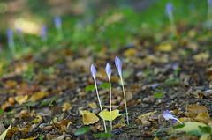 Three (Baubec Izzet) Tags: baubecizzet pentax bokeh flower nature forest