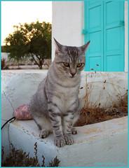 P9010736 18x24 (M64RM) Tags: gatto