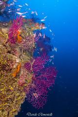 IMG_1387 (davide.clementelli) Tags: diving dive dives padi immersione immersioni ampportofino portofino liguria friends amici underwater underwaterlife sottacqua