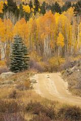 Autumn Color at Twin Lakes, CO (MiriamPoling) Tags: autumn fall yellow aspens twinlakes colorado 2018