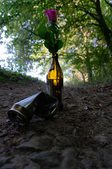 Waldlichtung (faoe_bi) Tags: identität geschlecht waldlichtung morgen bier rose