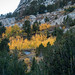 Fall Foliage in Little Lakes Valley