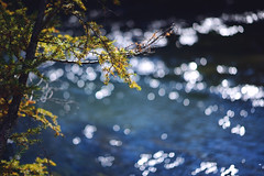 隨意一個景色就能讓人駐足停留好些片刻 (M.K. Design) Tags: japan tokyo nikko travel life family tree fall leaf nature landscape mountains river yellow red green nikon d800e afs 105mmf14e bokeh tele micro water 日本 日光 戰場之原 湯川 赤沼 自然研究步道 健行 自然 風景 楓葉 溪 山 尼康 淺景深 散景 東京 旅行 生活 家庭 親子 光影 樹 黃 綠 紅 濕原 國家公園