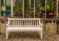 At the Botanical Garden - HWW! (suzanne~) Tags: window bench botanicalgarden munich germany bavaria plant