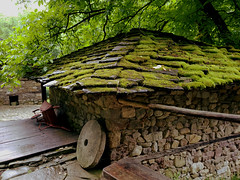 mossy roof (vereiasz) Tags: moss roof house building