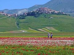 A Monet sarebbe piaciuto Castelluccio (giorgiorodano46) Tags: giugno2013 june 2013 giorgiorodano castelluccio piangrande fiorita papaveri monet umbria italy norcia primavera spring