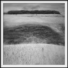 hillside (Andrew C Wallace) Tags: blackandwhite bw infrared ir microfourthirds m43 olympusomdem5 thephotontrap flinders victoria australia tiltshift