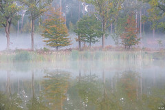 Reflexion with Mist (Martine Lambrechts) Tags: reflection reflexion with mist water landscape nature tree autumn