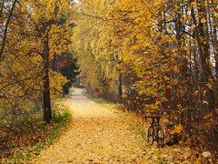 2018 Bike 180: Day 230, October 18 (olmofin) Tags: 2018bike180 finland bicycle polkupyörä fall colors leaves syksy lehdet ruska ulkoilutie path haltiala