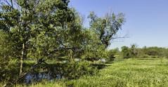 _MG_6984 (Scott Sanford Photography) Tags: 6d canon ef2470f28l eos landscape naturalbeauty naturallight nature outdoor sunlight texas topazlabs wetlands