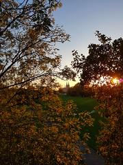 On the sunny side of autumn (Magic M.) Tags: rhinepark rhine autumn sundown colognecathedral cologne köln dom rheinpark herbst rhein sonnenuntergang