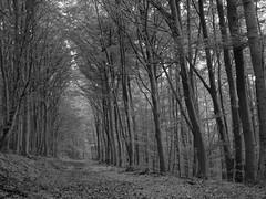 Habichtswald (near Kassel) (6)