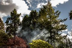 2018 264-365 Bonfire Patterns (kayakingjanet) Tags: bonfire dykefarm garden pulborough westsussex treasurehunt smokey 2018th63 2018365 anewfocus