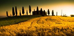 The Green, the Yellow (Beppe Rijs) Tags: 2018 italien juli sommer toskana italy july summer tuscany