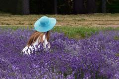 Discreetly (kodakid18) Tags: lavender lavenderfields women fields nature flowers outdoors womenflowers lavande lavandula lavanda summer flowering people granemones 80