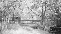 Profusion! (Elisafox22) Tags: elisafox22 sony a5000 irconverted infrared 850nm sony55210mmtelephotolens 55210mm telephoto lens monochrome park trees branches leaves foliage fencefriday hff lochsidewalk fence gate steps entrance fyvie fyviecastle aberdeenshire scotland fencedfriday blackandwhite monotone shadows bw mono greyscale ir elisaliddell©2018