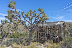 Almost Gone (magnetic_red) Tags: shack building wood wooden decay abandoned joshuatrees yucca mountains desert mojavenationalpreserve